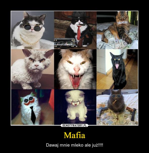 Mafia – Dawaj mnie mleko ale już!!!!