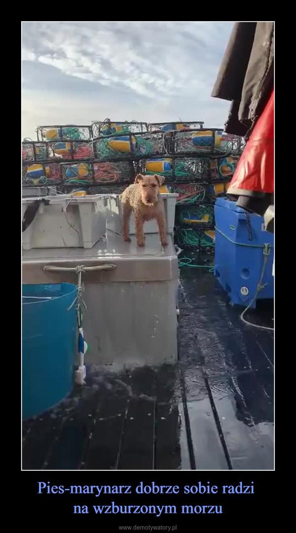 Pies-marynarz dobrze sobie radzi na wzburzonym morzu –