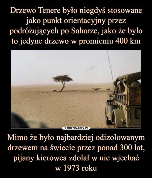 Drzewo Tenere było niegdyś stosowane jako punkt orientacyjny przez podróżujących po Saharze, jako że było to jedyne drzewo w promieniu 400 km Mimo że było najbardziej odizolowanym drzewem na świecie przez ponad 300 lat, pijany kierowca zdołał w nie wjechać w 1973 roku
