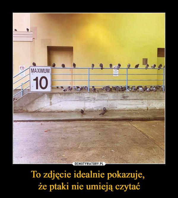 To zdjęcie idealnie pokazuje, że ptaki nie umieją czytać –  MAXIMUM 10