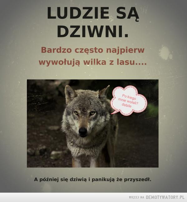 Wilk –  LUDZIE SĄ DZIWNI. Bardzo często najpierw wywołują wilka z lasu.... A później się dziwią i panikują że przyszedł.