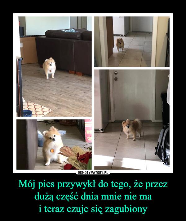 Mój pies przywykł do tego, że przez dużą część dnia mnie nie mai teraz czuje się zagubiony –