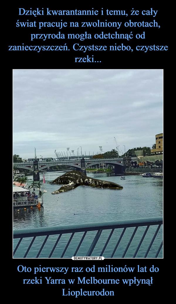 Oto pierwszy raz od milionów lat do rzeki Yarra w Melbourne wpłynął Liopleurodon –