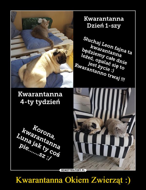 Kwarantanna Okiem Zwierząt :) –