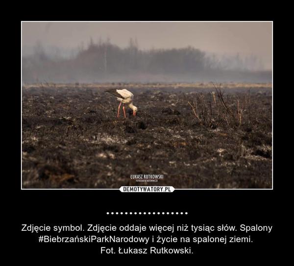 .................. – Zdjęcie symbol. Zdjęcie oddaje więcej niż tysiąc słów. Spalony #BiebrzańskiParkNarodowy i życie na spalonej ziemi. Fot. Łukasz Rutkowski.