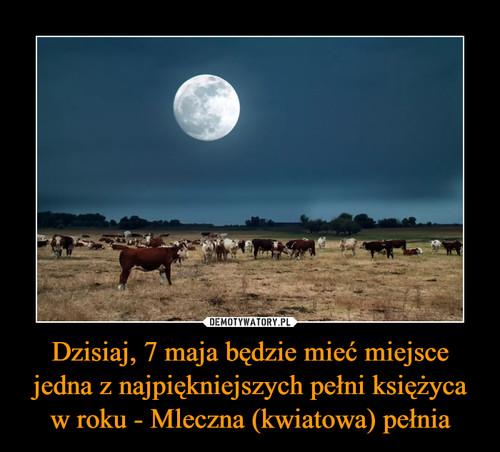 Dzisiaj, 7 maja będzie mieć miejsce jedna z najpiękniejszych pełni księżyca w roku - Mleczna (kwiatowa) pełnia