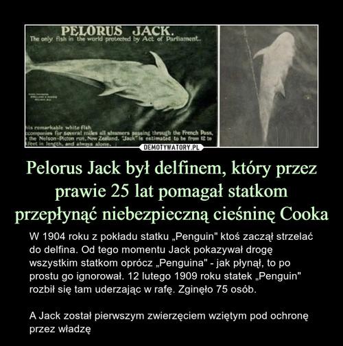 Pelorus Jack był delfinem, który przez prawie 25 lat pomagał statkom przepłynąć niebezpieczną cieśninę Cooka