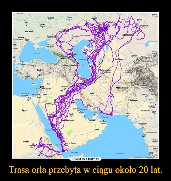 Trasa orła przebyta w ciągu około 20 lat. –