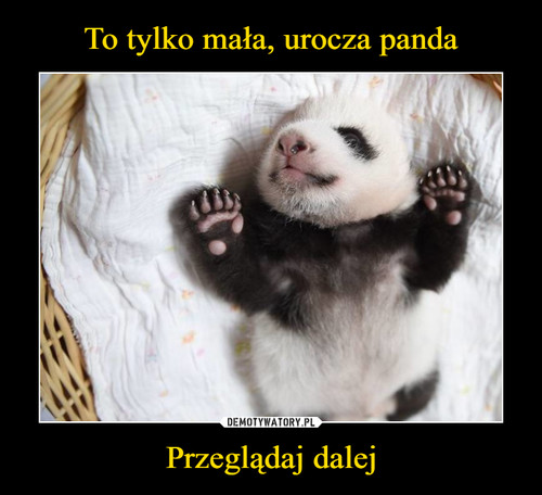 To tylko mała, urocza panda Przeglądaj dalej