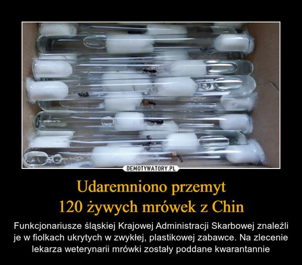 Udaremniono przemyt120 żywych mrówek z Chin – Funkcjonariusze śląskiej Krajowej Administracji Skarbowej znaleźli je w fiolkach ukrytych w zwykłej, plastikowej zabawce. Na zlecenie lekarza weterynarii mrówki zostały poddane kwarantannie