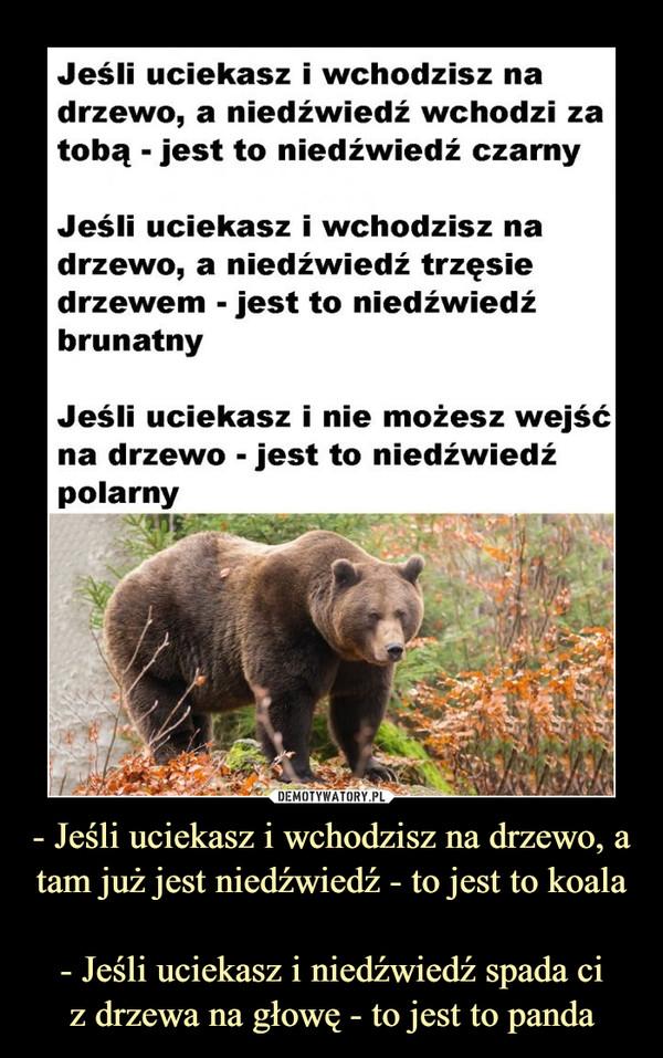 - Jeśli uciekasz i wchodzisz na drzewo, a tam już jest niedźwiedź - to jest to koala- Jeśli uciekasz i niedźwiedź spada ciz drzewa na głowę - to jest to panda –