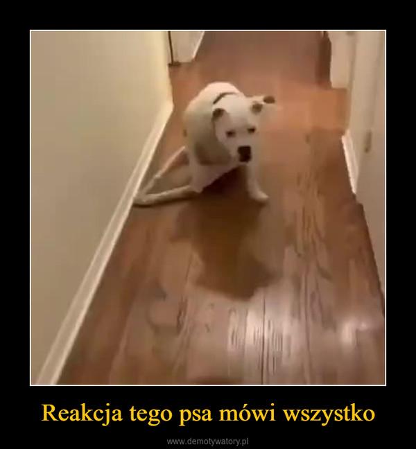 Reakcja tego psa mówi wszystko –