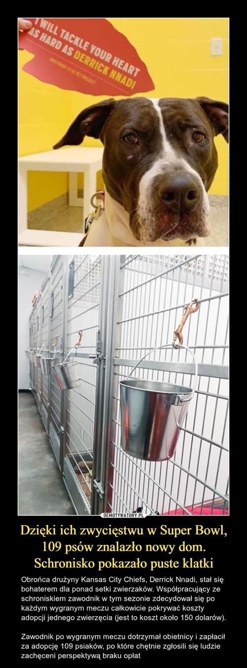 Dzięki ich zwycięstwu w Super Bowl, 109 psów znalazło nowy dom. Schronisko pokazało puste klatki
