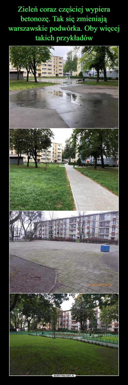 Zieleń coraz częściej wypiera betonozę. Tak się zmieniają warszawskie podwórka. Oby więcej takich przykładów