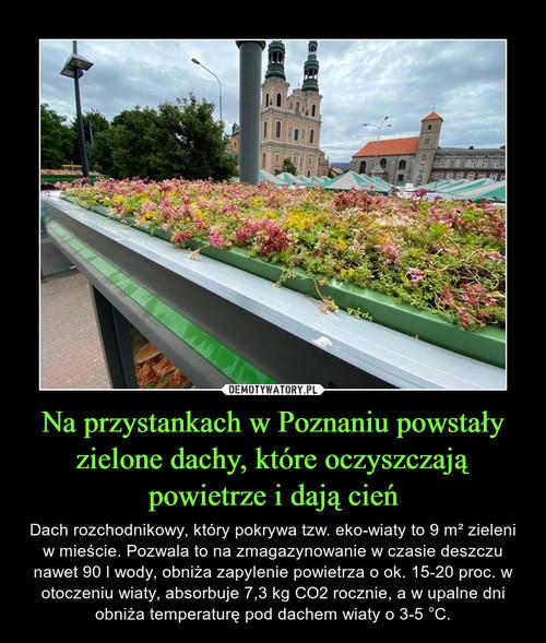 Na przystankach w Poznaniu powstały zielone dachy, które oczyszczają powietrze i dają cień