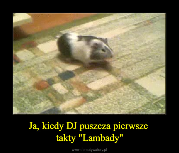 """Ja, kiedy DJ puszcza pierwsze takty """"Lambady"""" –"""
