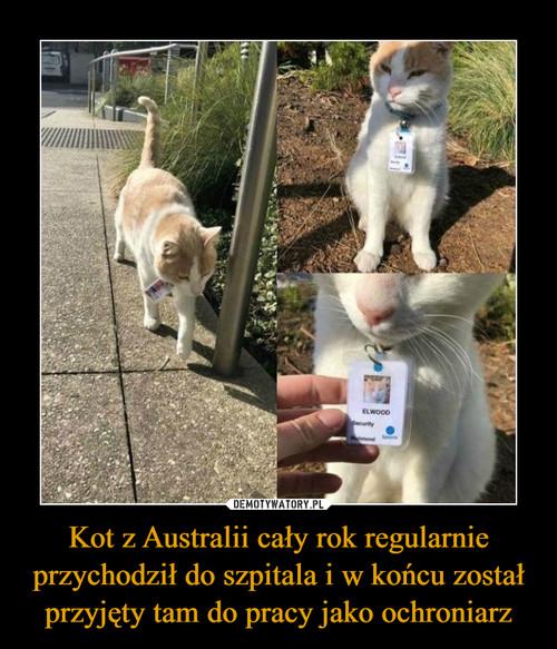 Kot z Australii cały rok regularnie przychodził do szpitala i w końcu został przyjęty tam do pracy jako ochroniarz