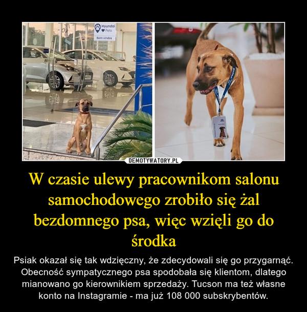 W czasie ulewy pracownikom salonu samochodowego zrobiło się żal bezdomnego psa, więc wzięli go do środka – Psiak okazał się tak wdzięczny, że zdecydowali się go przygarnąć. Obecność sympatycznego psa spodobała się klientom, dlatego mianowano go kierownikiem sprzedaży. Tucson ma też własne konto na Instagramie - ma już 108 000 subskrybentów.