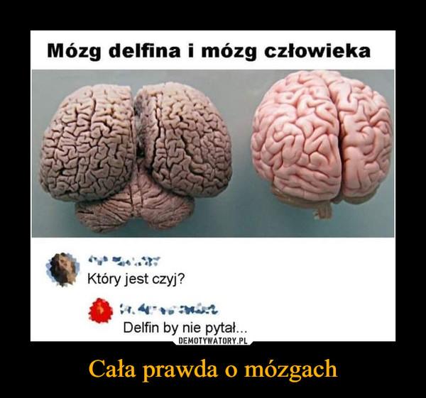 Cała prawda o mózgach –  Mózg delfina i mózg człowiekaKtóry jest czyj?Delfin by nie pyta...DEMOTYWATORY.PLCała prawda o mózgach