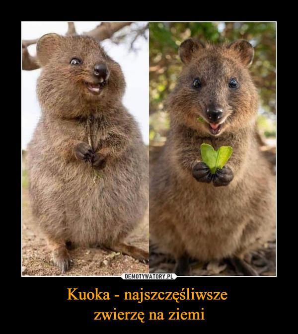Kuoka - najszczęśliwsze  zwierzę na ziemi