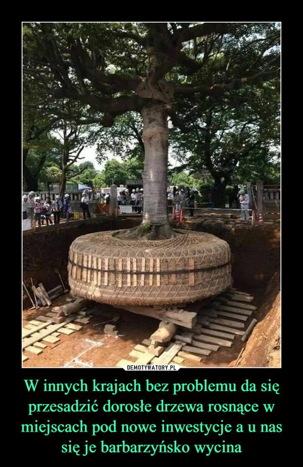 W innych krajach bez problemu da się przesadzić dorosłe drzewa rosnące w miejscach pod nowe inwestycje a u nas się je barbarzyńsko wycina –