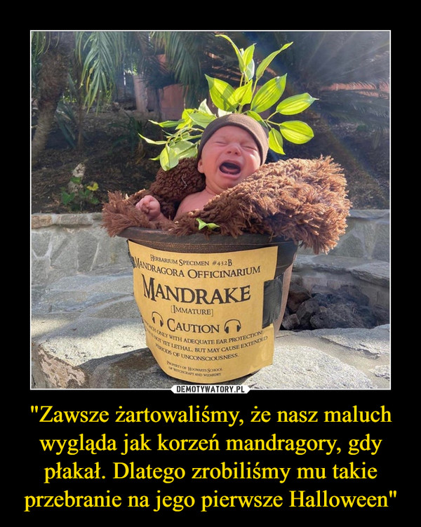"""""""Zawsze żartowaliśmy, że nasz maluch wygląda jak korzeń mandragory, gdy płakał. Dlatego zrobiliśmy mu takie przebranie na jego pierwsze Halloween"""" –"""