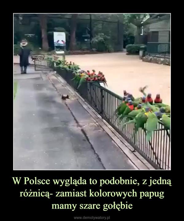 W Polsce wygląda to podobnie, z jedną różnicą- zamiast kolorowych papug mamy szare gołębie –