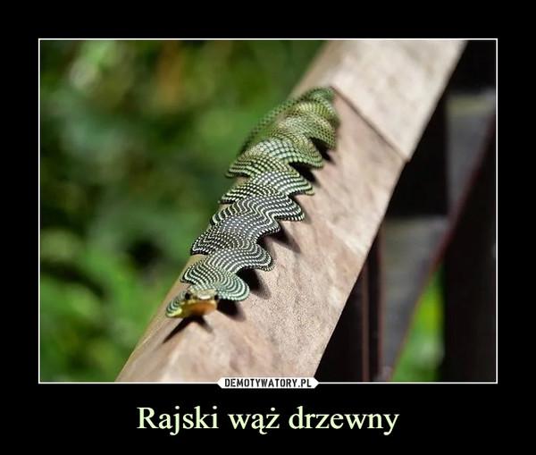 Rajski wąż drzewny –