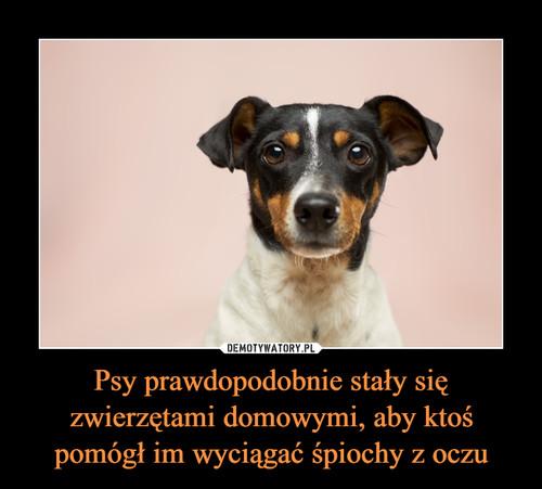 Psy prawdopodobnie stały się zwierzętami domowymi, aby ktoś pomógł im wyciągać śpiochy z oczu