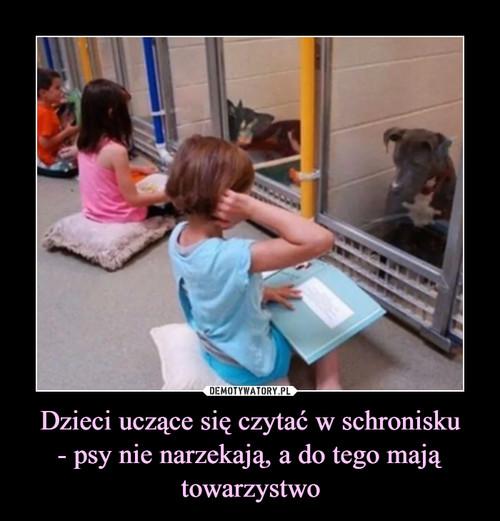 Dzieci uczące się czytać w schronisku - psy nie narzekają, a do tego mają towarzystwo