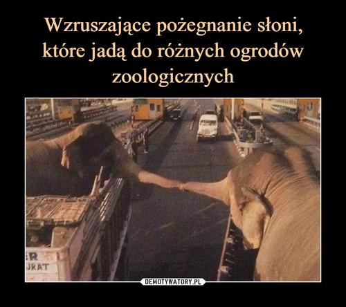 Wzruszające pożegnanie słoni, które jadą do różnych ogrodów zoologicznych