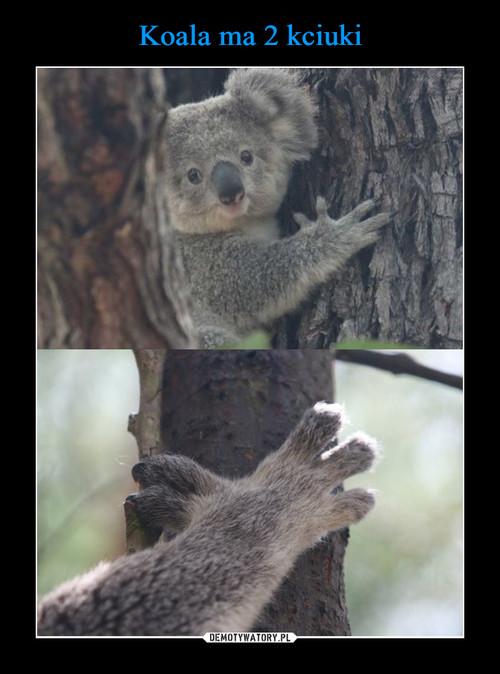 Koala ma 2 kciuki