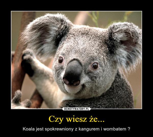 Czy wiesz że... – Koala jest spokrewniony z kangurem i wombatem ?