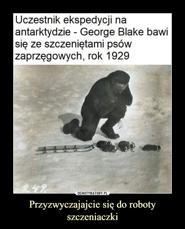 Przyzwyczajajcie się do roboty szczeniaczki –  Uczestnik ekspedycjiantarktydzie - George Blake bawisię ze szczeniętami psówzaprzęgowych, rok 1929na:249