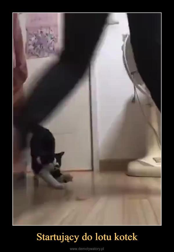 Startujący do lotu kotek –
