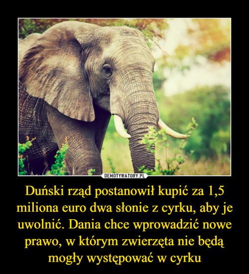 Duński rząd postanowił kupić za 1,5 miliona euro dwa słonie z cyrku, aby je uwolnić. Dania chce wprowadzić nowe prawo, w którym zwierzęta nie będą mogły występować w cyrku