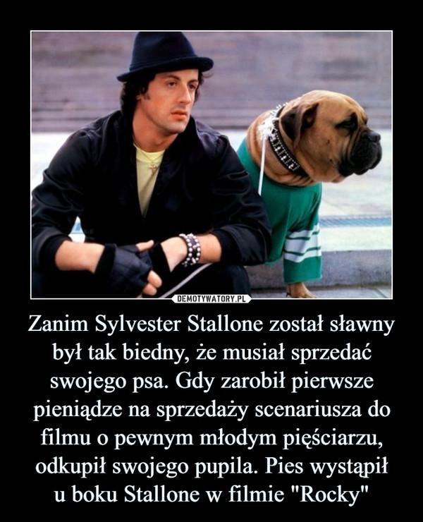 """Zanim Sylvester Stallone został sławny był tak biedny, że musiał sprzedać swojego psa. Gdy zarobił pierwsze pieniądze na sprzedaży scenariusza do filmu o pewnym młodym pięściarzu, odkupił swojego pupila. Pies wystąpiłu boku Stallone w filmie """"Rocky"""" –"""