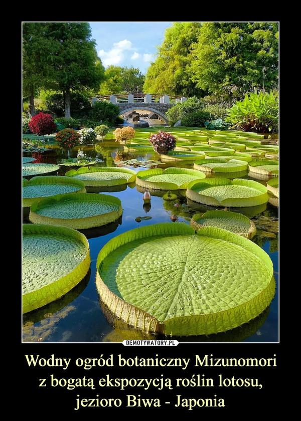 Wodny ogród botaniczny Mizunomoriz bogatą ekspozycją roślin lotosu,jezioro Biwa - Japonia –