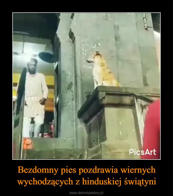 Bezdomny pies pozdrawia wiernych wychodzących z hinduskiej świątyni –