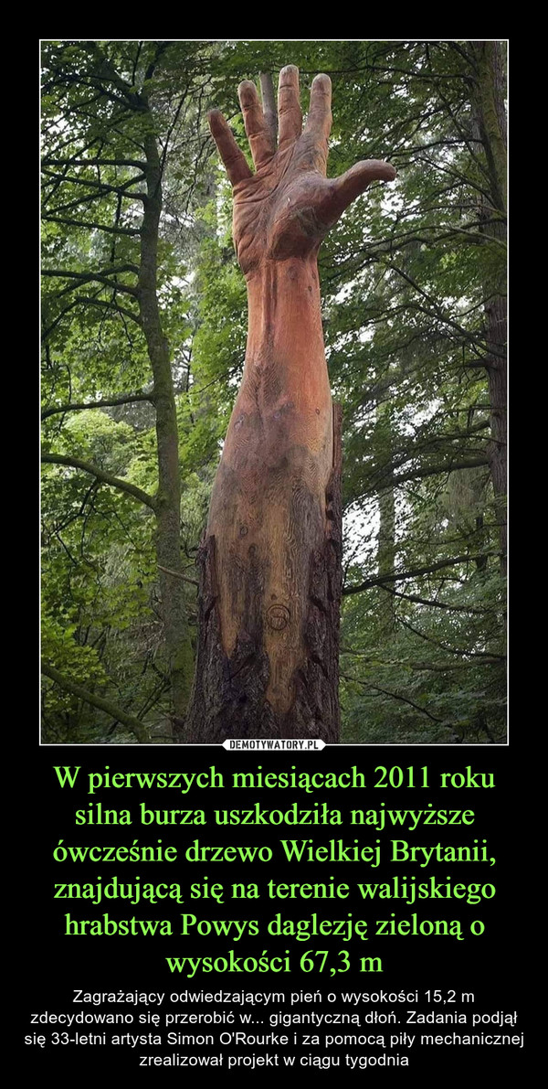 W pierwszych miesiącach 2011 roku silna burza uszkodziła najwyższe ówcześnie drzewo Wielkiej Brytanii, znajdującą się na terenie walijskiego hrabstwa Powys daglezję zieloną o wysokości 67,3 m – Zagrażający odwiedzającym pień o wysokości 15,2 m zdecydowano się przerobić w... gigantyczną dłoń. Zadania podjął się 33-letni artysta Simon O'Rourke i za pomocą piły mechanicznej zrealizował projekt w ciągu tygodnia