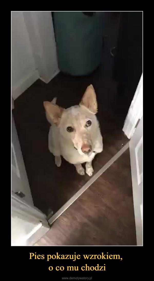 Pies pokazuje wzrokiem, o co mu chodzi –