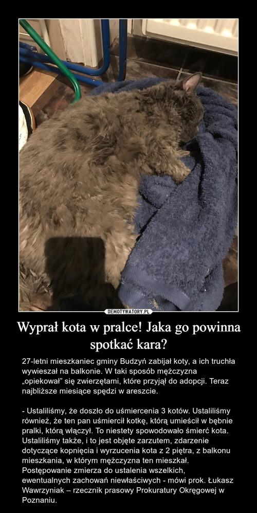 Wyprał kota w pralce! Jaka go powinna spotkać kara?