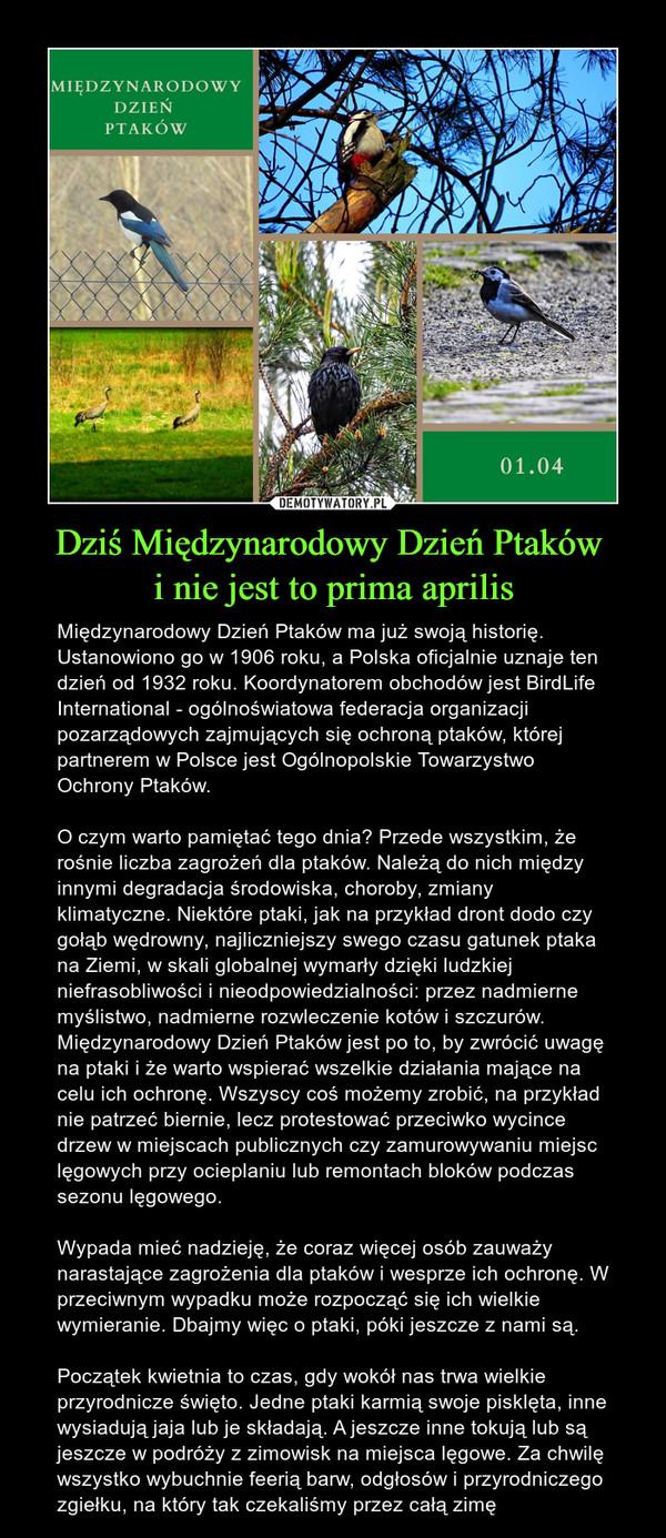 Dziś Międzynarodowy Dzień Ptaków i nie jest to prima aprilis – Międzynarodowy Dzień Ptaków ma już swoją historię. Ustanowiono go w 1906 roku, a Polska oficjalnie uznaje ten dzień od 1932 roku. Koordynatorem obchodów jest BirdLife International - ogólnoświatowa federacja organizacji pozarządowych zajmujących się ochroną ptaków, której partnerem w Polsce jest Ogólnopolskie Towarzystwo Ochrony Ptaków.O czym warto pamiętać tego dnia? Przede wszystkim, że rośnie liczba zagrożeń dla ptaków. Należą do nich między innymi degradacja środowiska, choroby, zmiany klimatyczne. Niektóre ptaki, jak na przykład dront dodo czy gołąb wędrowny, najliczniejszy swego czasu gatunek ptaka na Ziemi, w skali globalnej wymarły dzięki ludzkiej niefrasobliwości i nieodpowiedzialności: przez nadmierne myślistwo, nadmierne rozwleczenie kotów i szczurów. Międzynarodowy Dzień Ptaków jest po to, by zwrócić uwagę na ptaki i że warto wspierać wszelkie działania mające na celu ich ochronę. Wszyscy coś możemy zrobić, na przykład nie patrzeć biernie, lecz protestować przeciwko wycince drzew w miejscach publicznych czy zamurowywaniu miejsc lęgowych przy ocieplaniu lub remontach bloków podczas sezonu lęgowego. Wypada mieć nadzieję, że coraz więcej osób zauważy narastające zagrożenia dla ptaków i wesprze ich ochronę. W przeciwnym wypadku może rozpocząć się ich wielkie wymieranie. Dbajmy więc o ptaki, póki jeszcze z nami są.Początek kwietnia to czas, gdy wokół nas trwa wielkie przyrodnicze święto. Jedne ptaki karmią swoje pisklęta, inne wysiadują jaja lub je składają. A jeszcze inne tokują lub są jeszcze w podróży z zimowisk na miejsca lęgowe. Za chwilę wszystko wybuchnie feerią barw, odgłosów i przyrodniczego zgiełku, na który tak czekaliśmy przez całą zimę