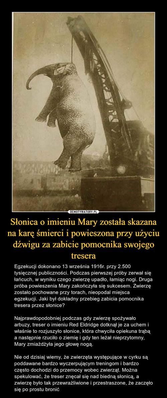 Słonica o imieniu Mary została skazana na karę śmierci i powieszona przy użyciu dźwigu za zabicie pomocnika swojego tresera