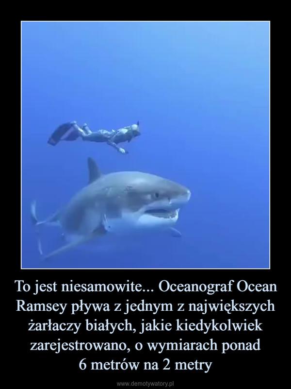 To jest niesamowite... Oceanograf Ocean Ramsey pływa z jednym z największych żarłaczy białych, jakie kiedykolwiek zarejestrowano, o wymiarach ponad6 metrów na 2 metry –
