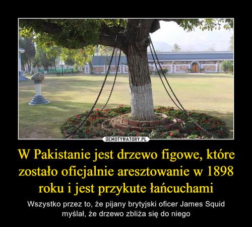 W Pakistanie jest drzewo figowe, które zostało oficjalnie aresztowanie w 1898 roku i jest przykute łańcuchami