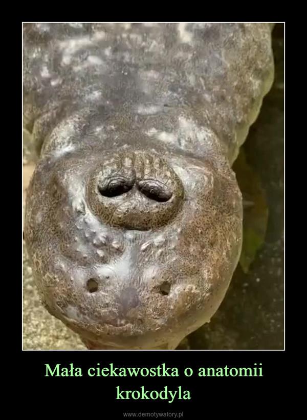Mała ciekawostka o anatomii krokodyla –