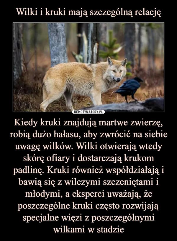 Kiedy kruki znajdują martwe zwierzę, robią dużo hałasu, aby zwrócić na siebie uwagę wilków. Wilki otwierają wtedy skórę ofiary i dostarczają krukom padlinę. Kruki również współdziałają i bawią się z wilczymi szczeniętami i młodymi, a eksperci uważają, że poszczególne kruki często rozwijają specjalne więzi z poszczególnymi wilkami w stadzie –
