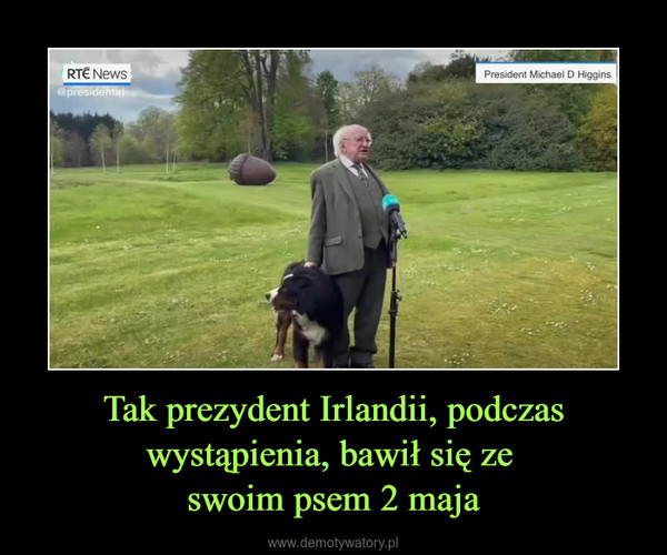 Tak prezydent Irlandii, podczas wystąpienia, bawił się ze swoim psem 2 maja –