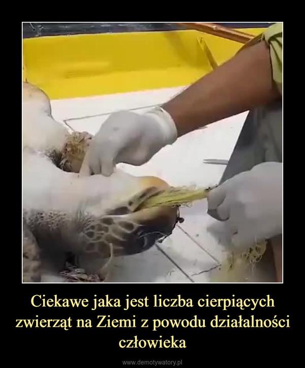 Ciekawe jaka jest liczba cierpiących zwierząt na Ziemi z powodu działalności człowieka –